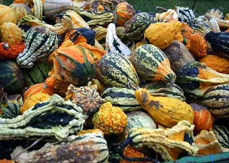 It's Decorative Gourd Season, Motherfuckers